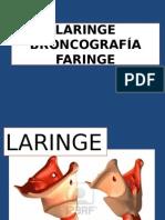 laringe y faringe.pptx