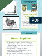 Hueso Lagrimal y Cornete Inferior