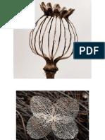 Botanical for Screen Printing FALL '15