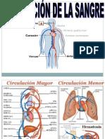 CIRCULACIÓN SANGUINEA.pdf
