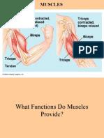 Js Muscles