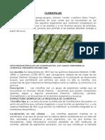 LAS CLOROFILAS.docx