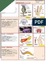 DigestiÓn en Los Invertebrados 2015