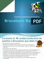 Brucelosis Bovina