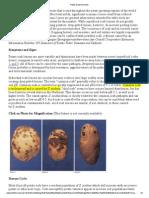 Potato Scab Fact Sheet