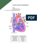 Circulatory System Worksheet