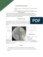Staphylococcus Aureus Caracterisiticas