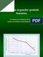 Organe sexuale feminine foto