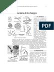 Estructuras de los hongos.pdf