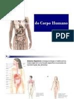 Sistema Digestorio