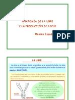 anatomia_braguer_i_produccia_llet (1).pdf