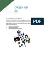 Inyectologia en Bovinos