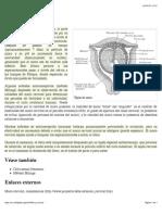 Wikipedia - Moco Cervical (CHECKED) R