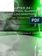 Protection, Support and Locomotion Sildes