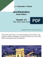 Ciclo AcidoCitrico ,Fosforilacion Oxidativa