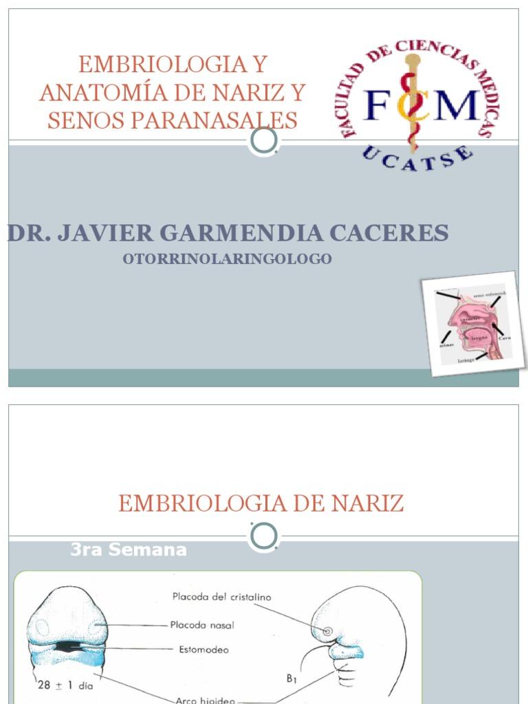 1. Embriologia Clase Nariz y Senos