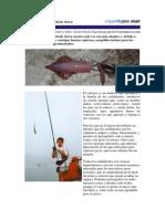 Pesca.del.Calamar.desde.tierra