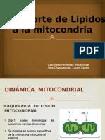 Transporte de Lipidos en la Mitocondria