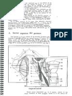 Diafragma Pelviano y Urogenital