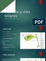 Vesícula y Vías Biliares
