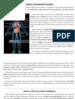 Modelos Abordados en La Unidad de Sistema Nervioso