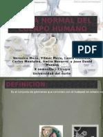 Flora Normal Del Cuerpo Humano