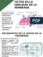 DIAPOSITIVAS DE CAP 1 DE ROBBINS