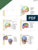 Anatomia Crânio