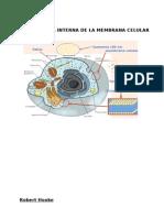 Estructura Interna de La Membrana Celular