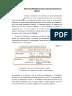 Efectos de Los Procesos Tecnológicos en La Estabilidad de Los Lípidos