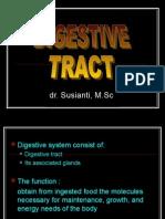 Digestive Ss