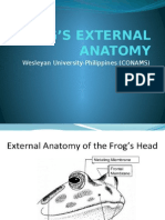 Frogs External Anatomy