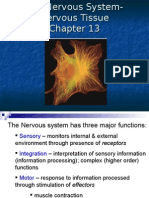 Anatomy Nervous Tissue - Chap 13