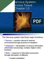 Anatomy Nervous Tissue - Chap 13