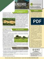 Boletín Tierra y Derechos N° 11