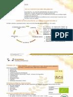 CERTIFICACION ORGANICA- Quinua