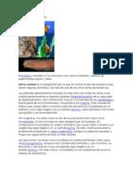 Reino Animal y Imagenes