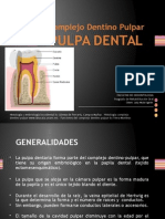 250338946 Histologia Dentaria Pulpa Dental