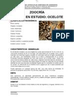 zoocria del tigrillo
