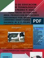 Caracteristicas Fenotipicas de Razas de Porcinos