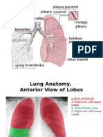 F. Dr. Darwin, Sp.B Anatomi Sistem Respirasi