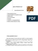 Plan Afaceri Plantatie de Nuci
