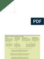 Laporan Pendahuluan / LP Sirosis Hepatis Lengkap Terbaru Download Pdf Dan Doc- KitaPastiSehat