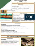 ficha do castanheiro.pdf