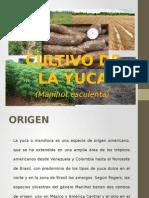 Cultivo de La Yuca