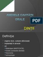 Anexele Cav Buc-DINTII