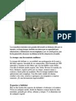 """""""Los elefantes"""