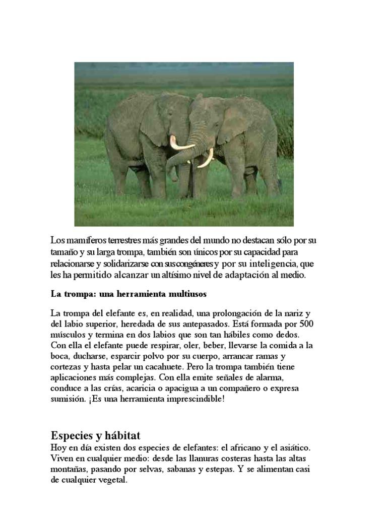 Los elefantes sensibles sociales y sabios for Que es un articulo cultural o de espectaculos
