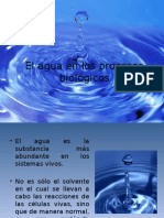 El Agua en Los Procesos Biológicos