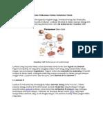 Struktur Mekanisme Sistem Kekebalan Tubuh
